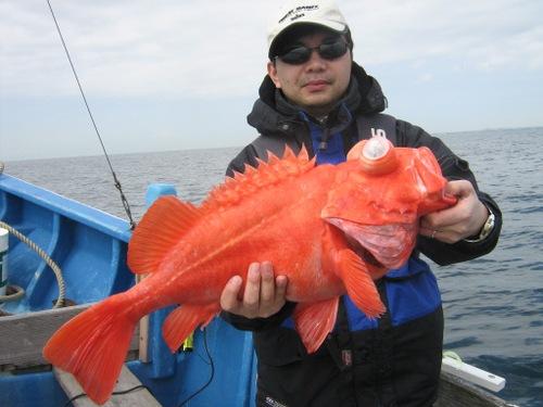 Hashi34kg